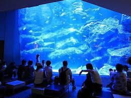 2/23(日)探検部「水族館に行ってみよう!」